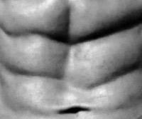 les muscles abdominaux